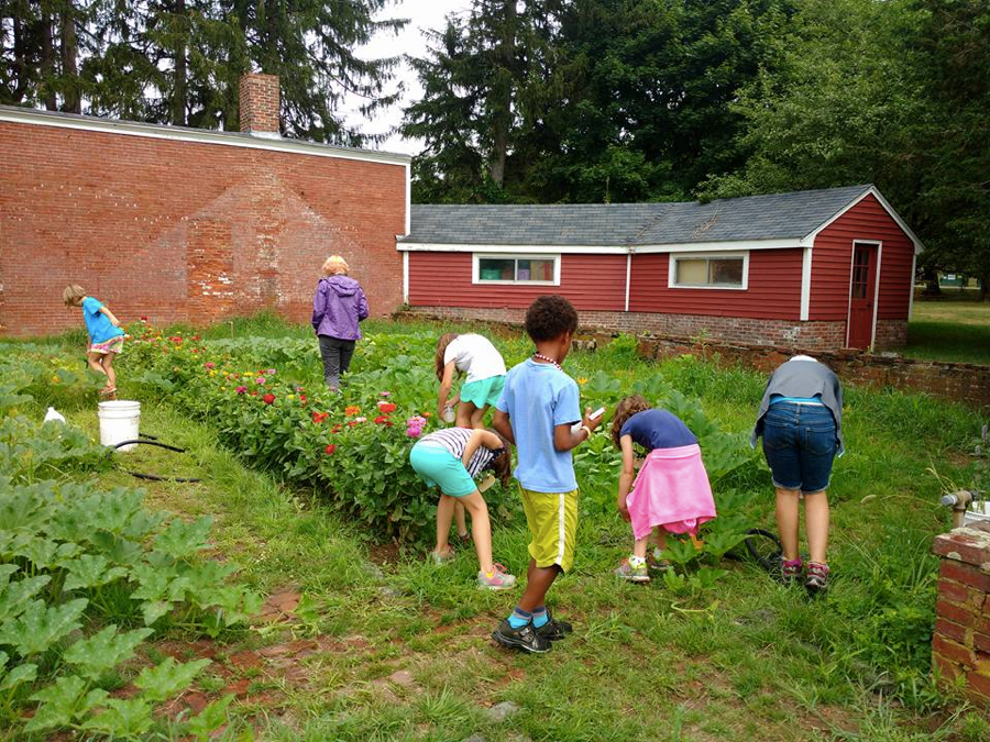 "August 2016. Summer camp students tending to Mimi Batchelder's ""Bean shed"" walled garden, recently incorporated into the school's curriculum."